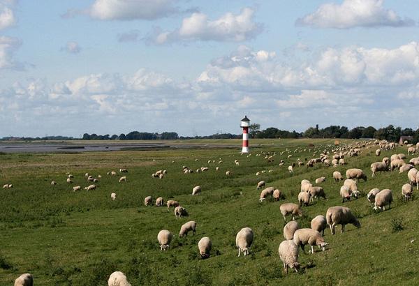 Leuchturm und Schafe an der Küste
